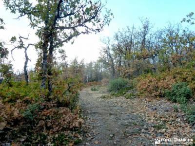 Hayedo Tejera Negra; viajes noviembre; charca verde pedriza rutas a pie por madrid viajes en grupo o